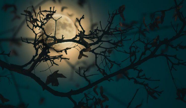 新月と満月のプチ断食
